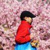 【写真】2017年の桜〜熱海・渋谷・代々木公園・伊豆山神社