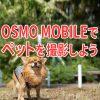 【ガジェット】OSMO MOBILEでペットを撮影しよう!