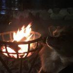 【熱海】月夜のサンビーチで薪能を観てきた!