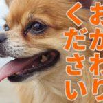 【愛犬】絵が描けなくてもLINEスタンプが作れる!