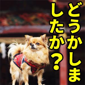 愛犬イチ「どうかしました?」