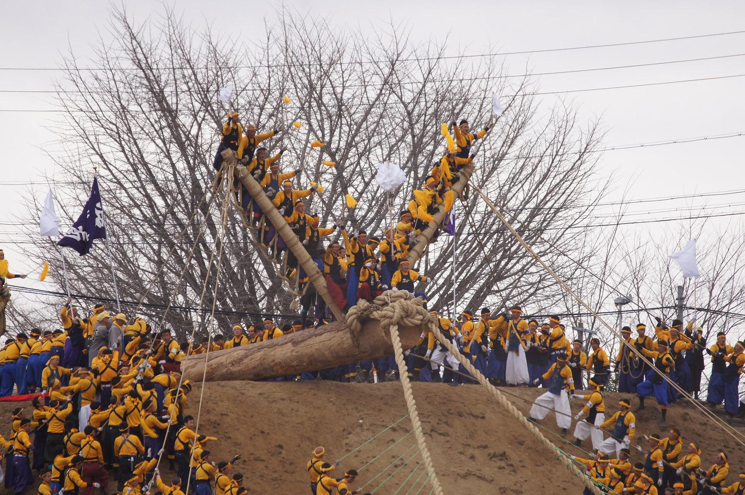 諏訪大社 御柱祭17