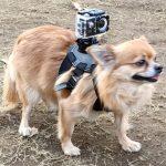 【愛犬】犬目線の映像を撮ってみたい