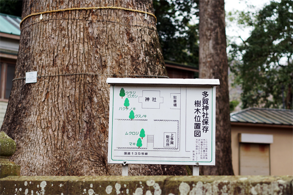 多賀神社 保存樹木位置図