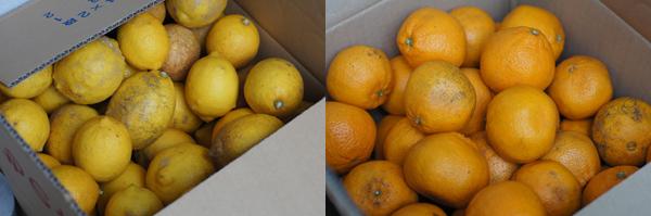 和歌山の柑橘を使用