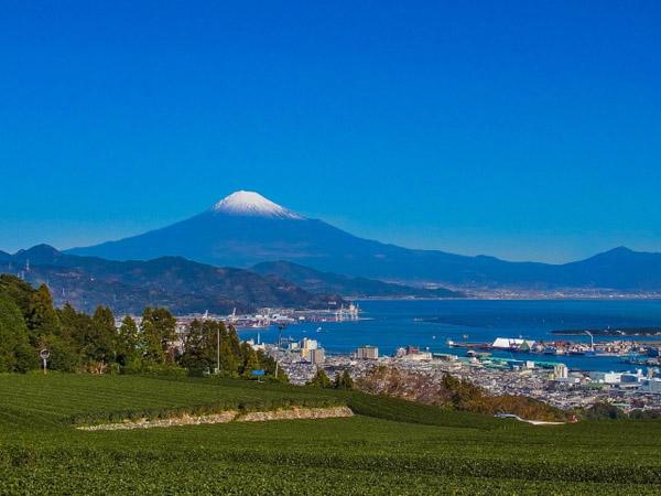 AC_静岡県富士山と茶畑