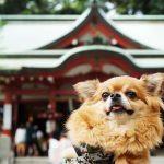 【熱海】来宮神社のお休み処でインスタ映え!