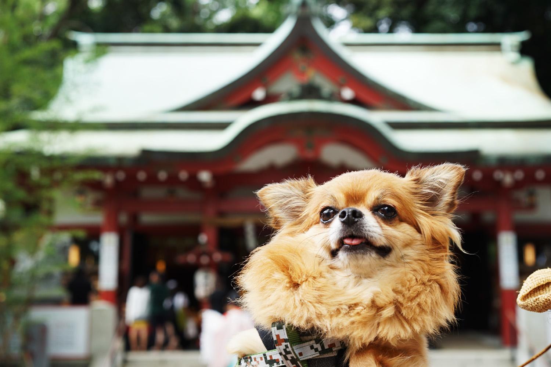 来宮神社とイチ
