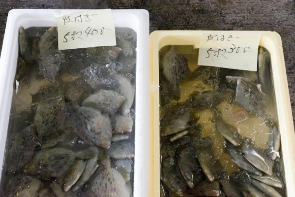 熱海魚祭り04_カワハギ