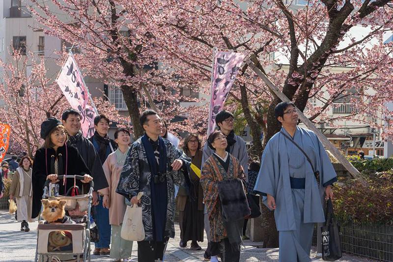 10_糸川あたみ桜