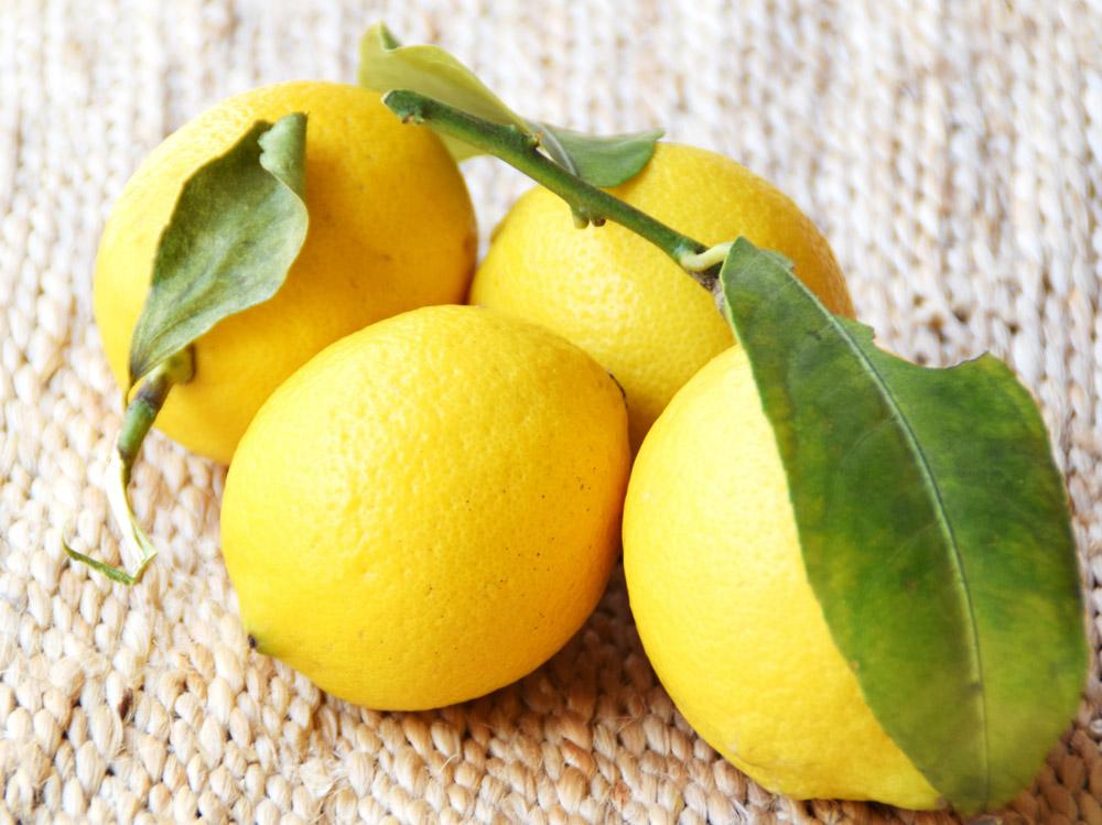 熱海のレモン-01