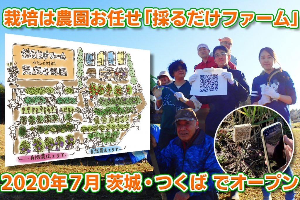茨城県つくば市採るだけファーム
